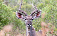 Visiter le parc Kruger