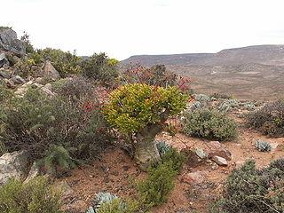 Paysage culturel et botanique du Richtersveld
