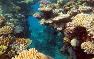 Visiter la Barrière de corail