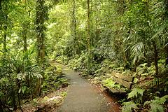 Forêts humides Gondwana de l'Australie