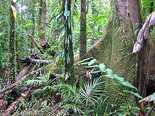 Tropiques humides de Queensland