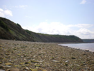 Falaises fossilifères de Joggins