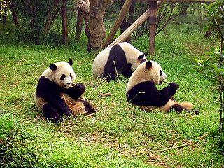 Sanctuaires du grand panda du Sichuan