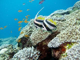 Fonds marins Nouvelle-Calédonie
