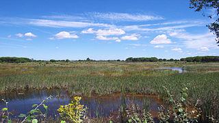 Parc national de Donana