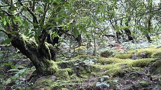 Parc national de Garajonay