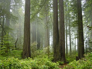 Parc national Redwood