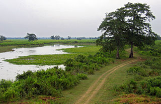 Parc national de Kaziranga