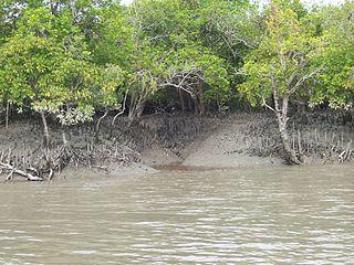 Parc national des Sundarbans