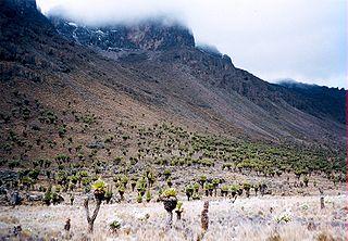 Parc national / Forêt naturelle du Mont Kenya