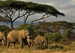 Parc animalier Kenya