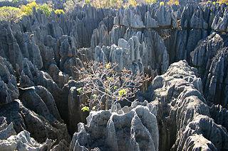 Réserve naturelle intégrale du Tsingy de Bemaraha