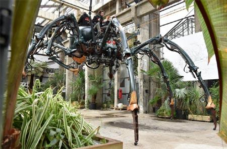 Araignée Nantes