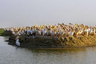 Patrimoine historique Sénégal