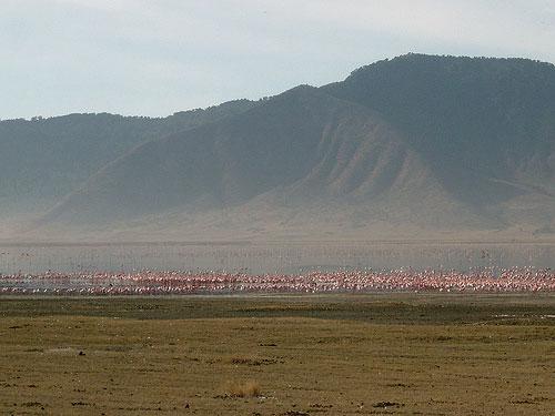 Visiter Serengeti et Ngorongoro